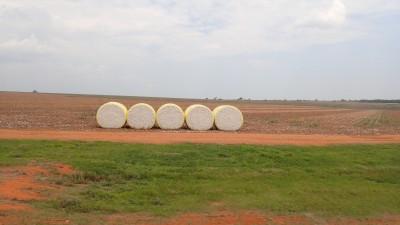 balles de coton de 2m de diamètre