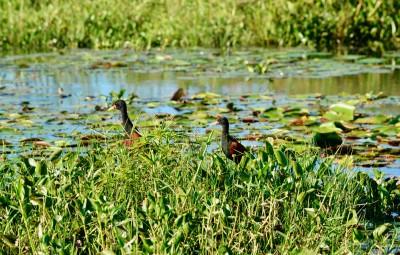 la lagune d'Ibera