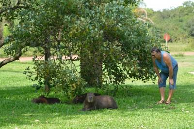 Gérard et les capybaras
