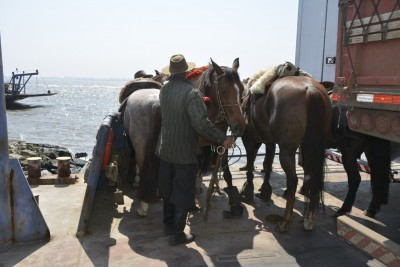 même les chevaux prennent la barge