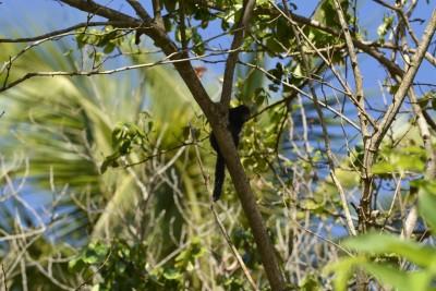 un petit singe dans les arbres juste au dessus du camion