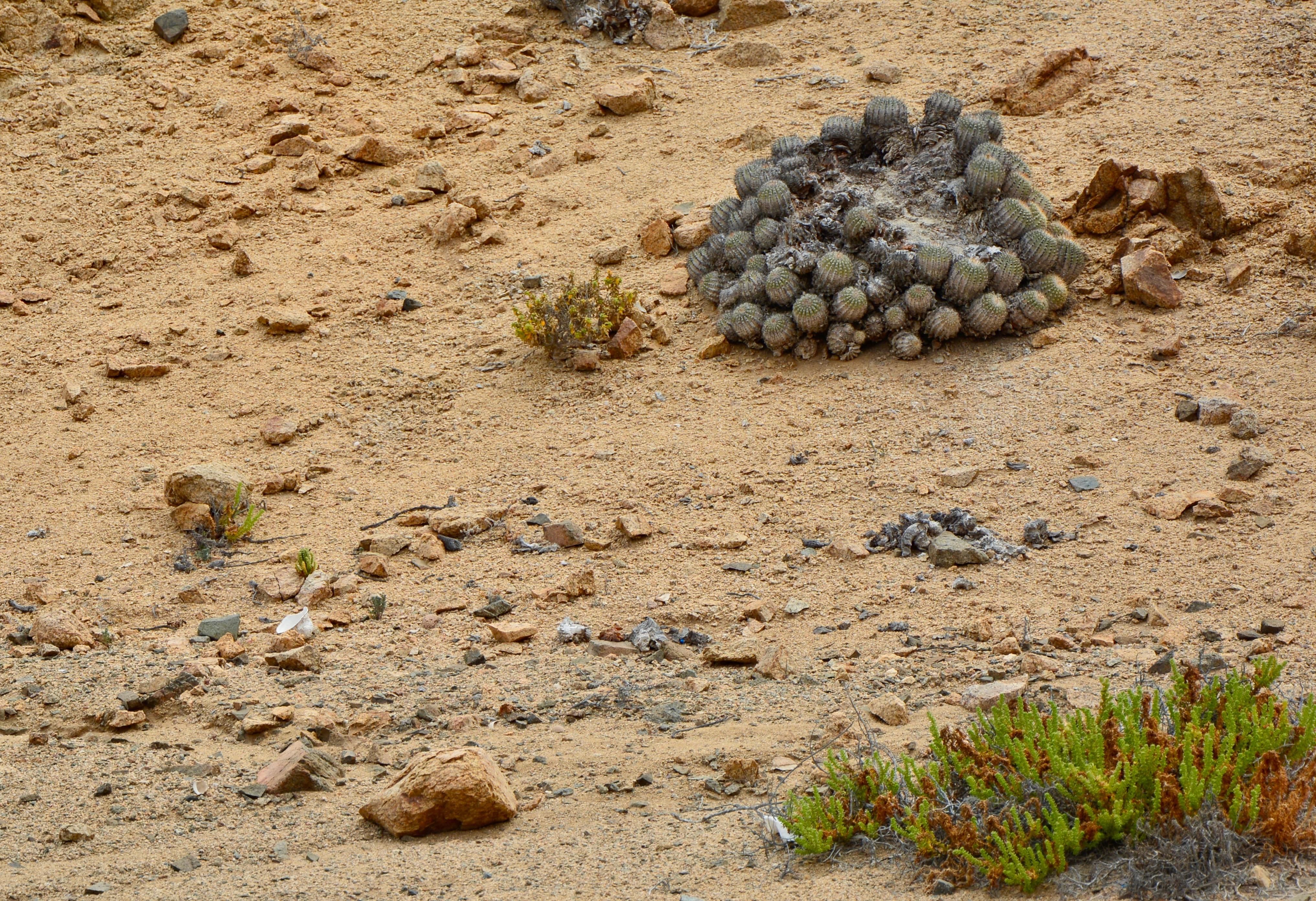 Quelques malheureux cactus essaient de pousser