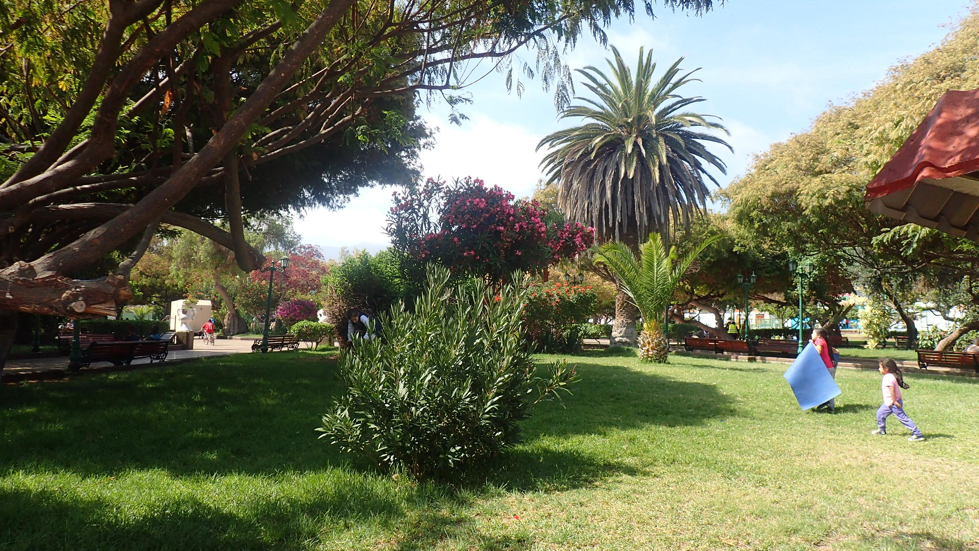 Le parc de Taltal. Enfin de la verdure