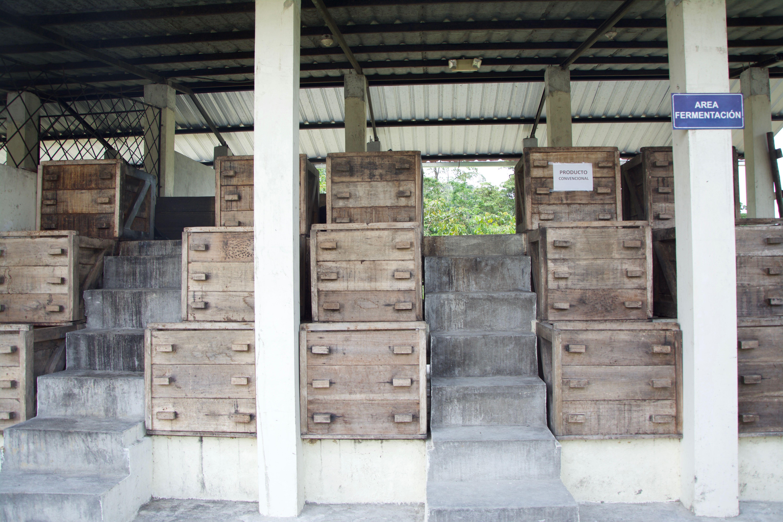 cuves de fermentation : les fèves y restent 48h