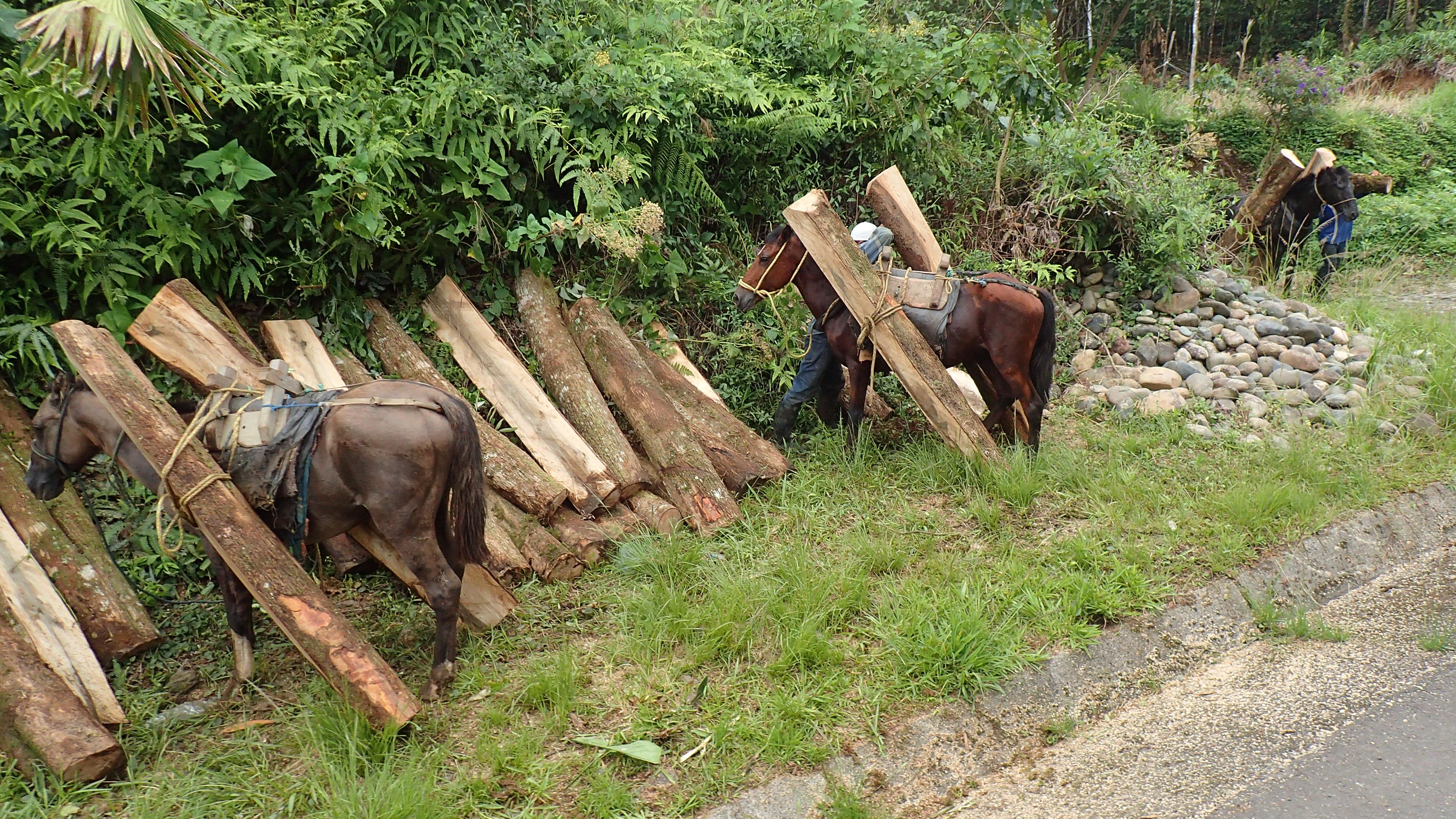 débardage du bois