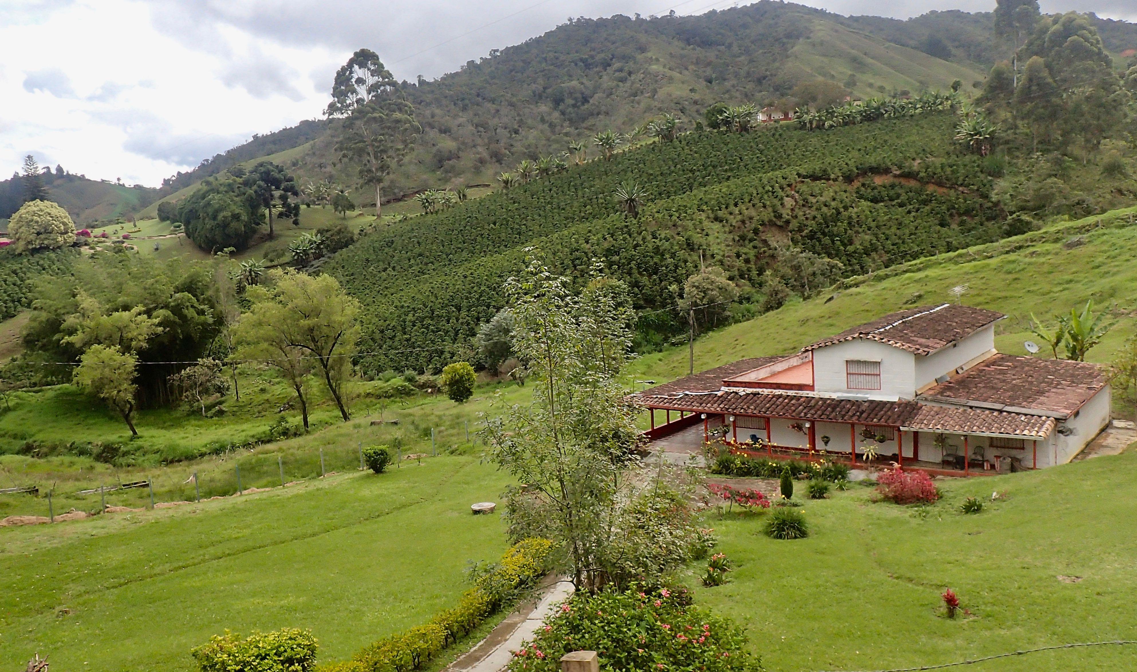 des plantations de café