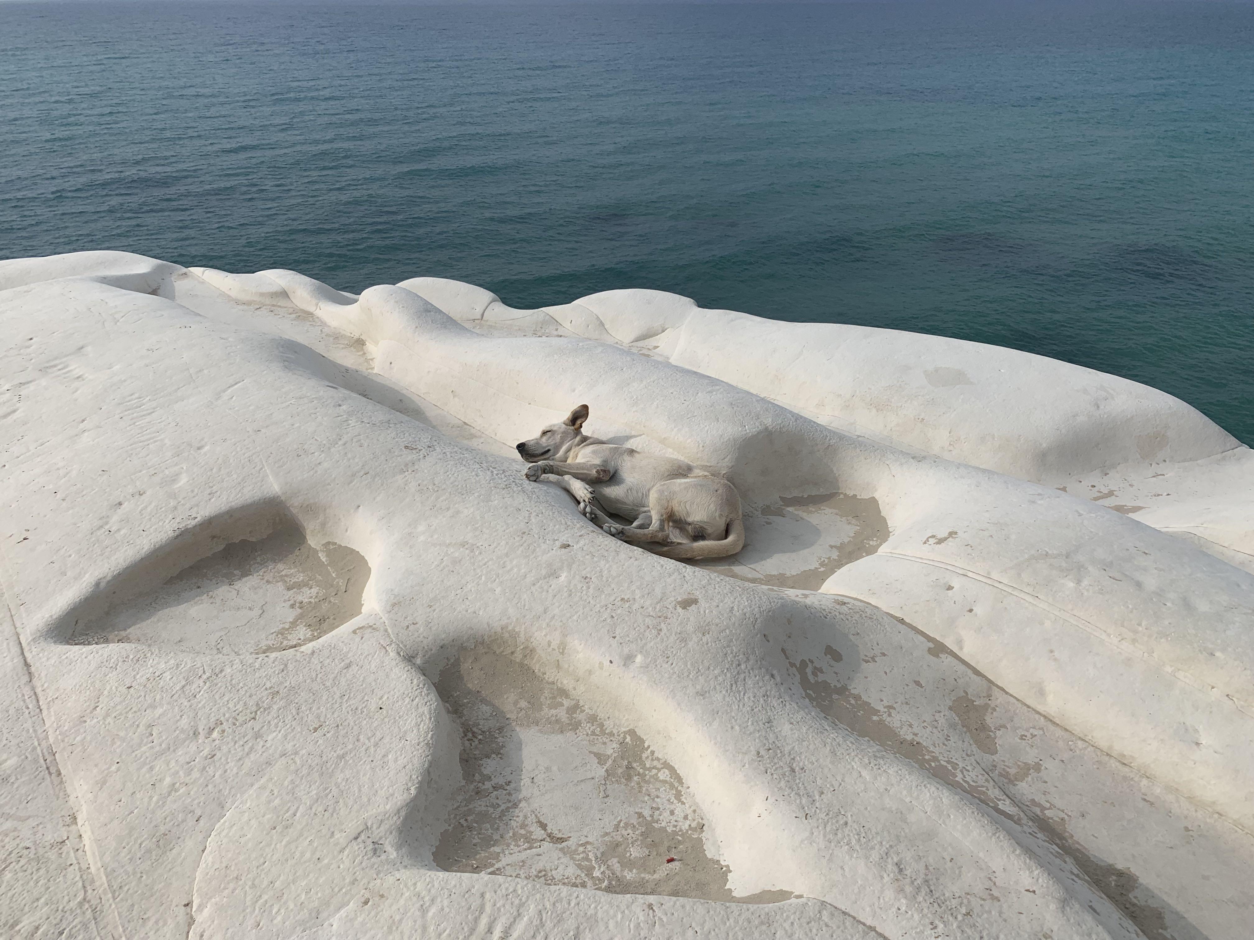 même le chien a pris la couleur de la falaise !